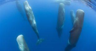 شاهد كيف تنام الحيتان في المحيط